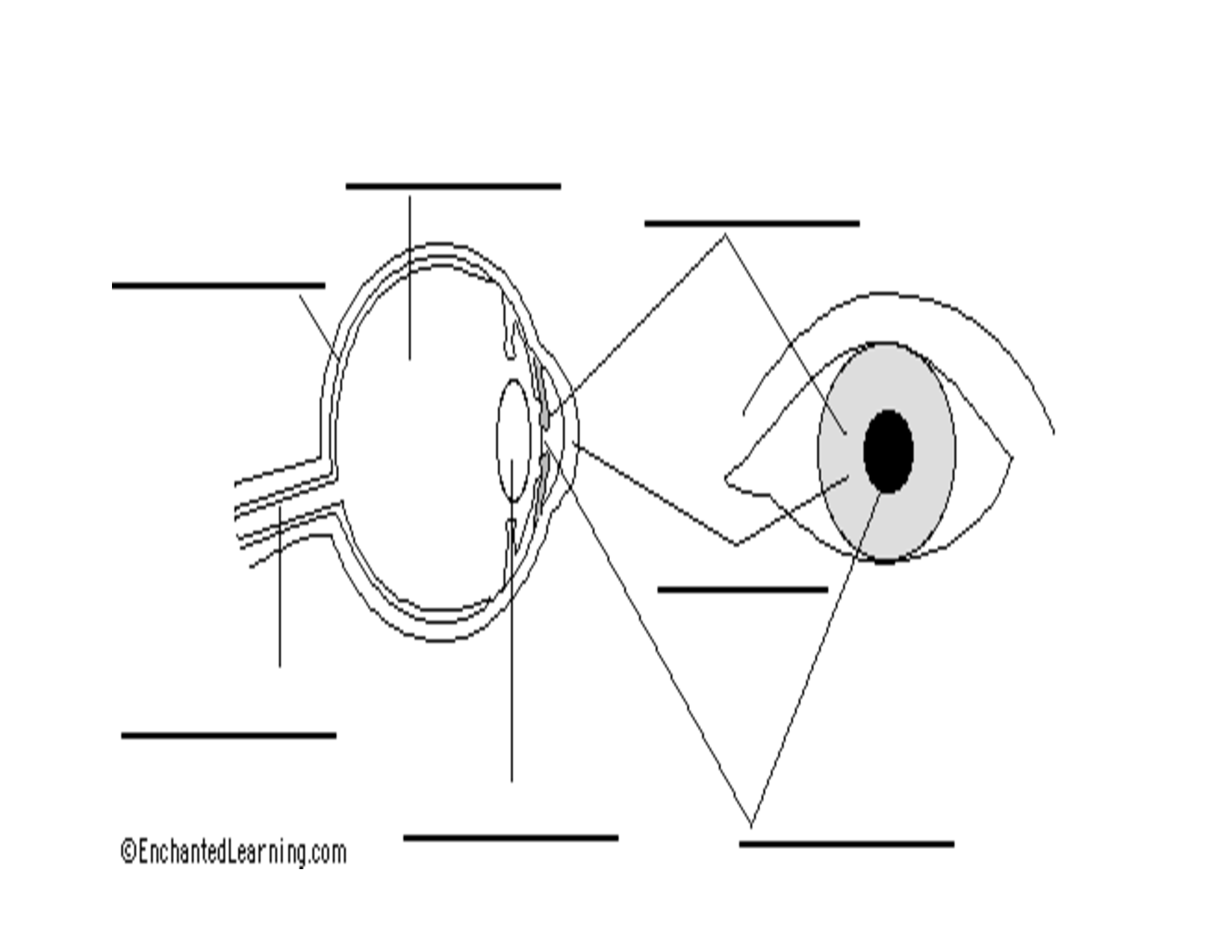 Human Eye Diagram Labeled Sketch Coloring Page