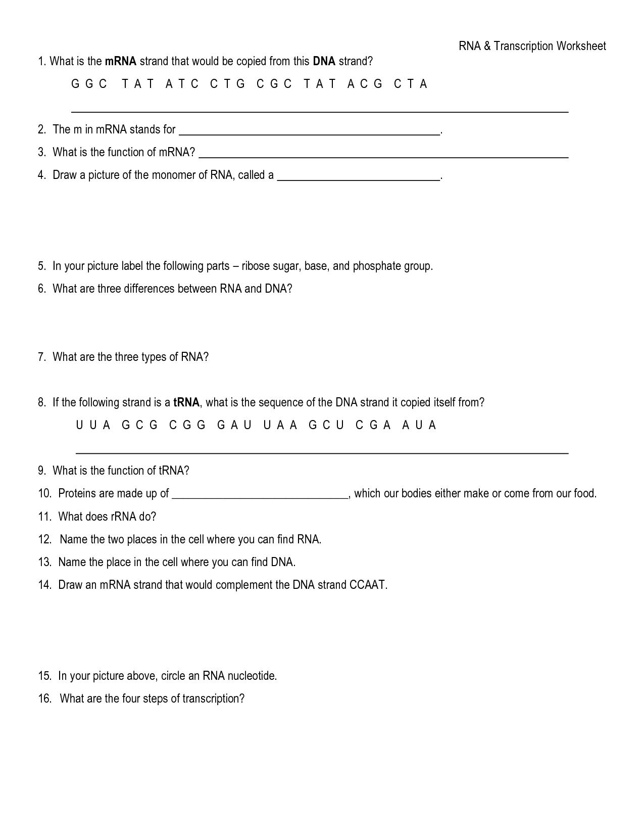 19 Best Images Of Dna Transcription Worksheet