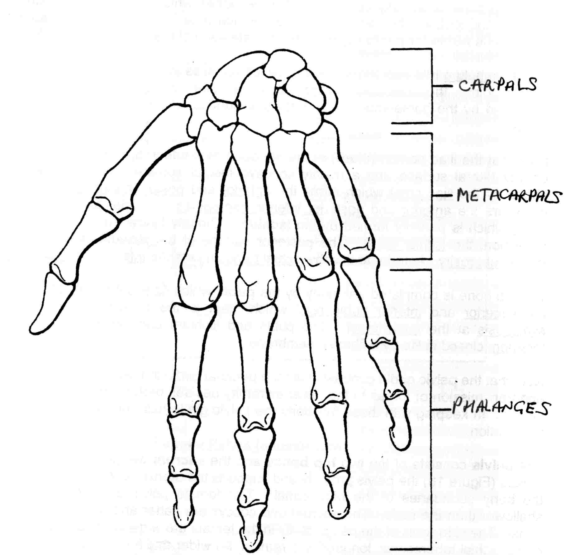 Shoulder Joint Diagram