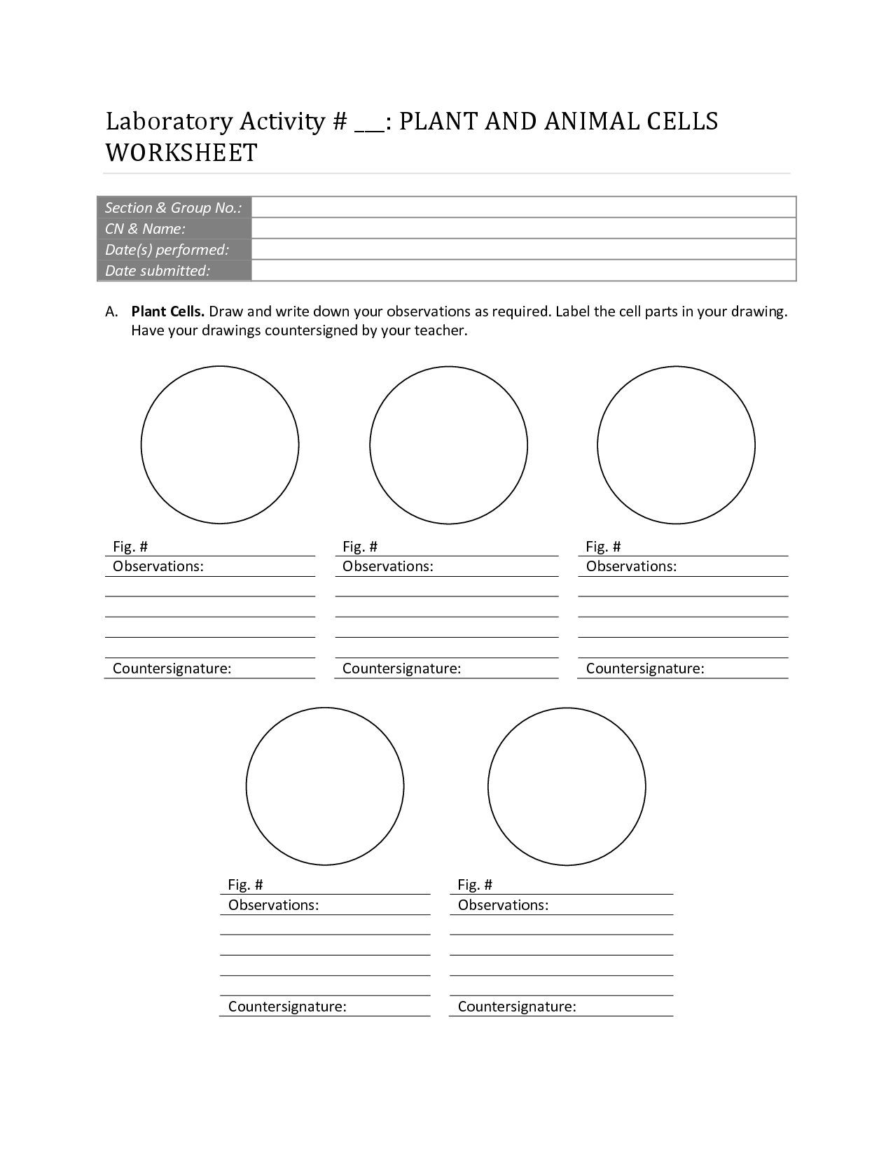 Biology Cell Labeling Worksheet Printable Free