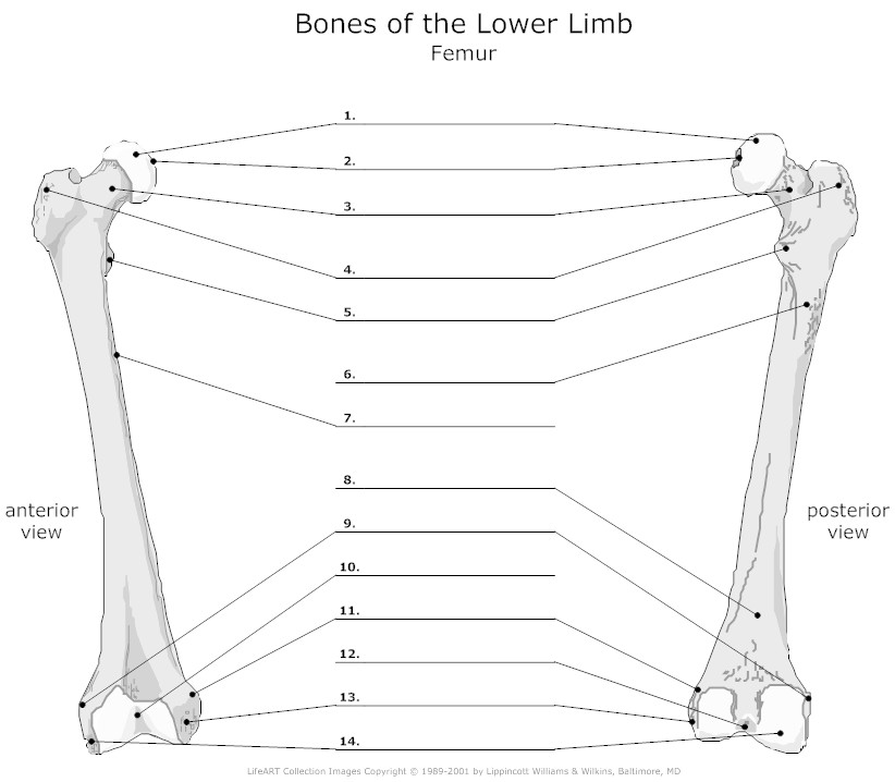 Axial Skeleton Labeling Worksheet Answers