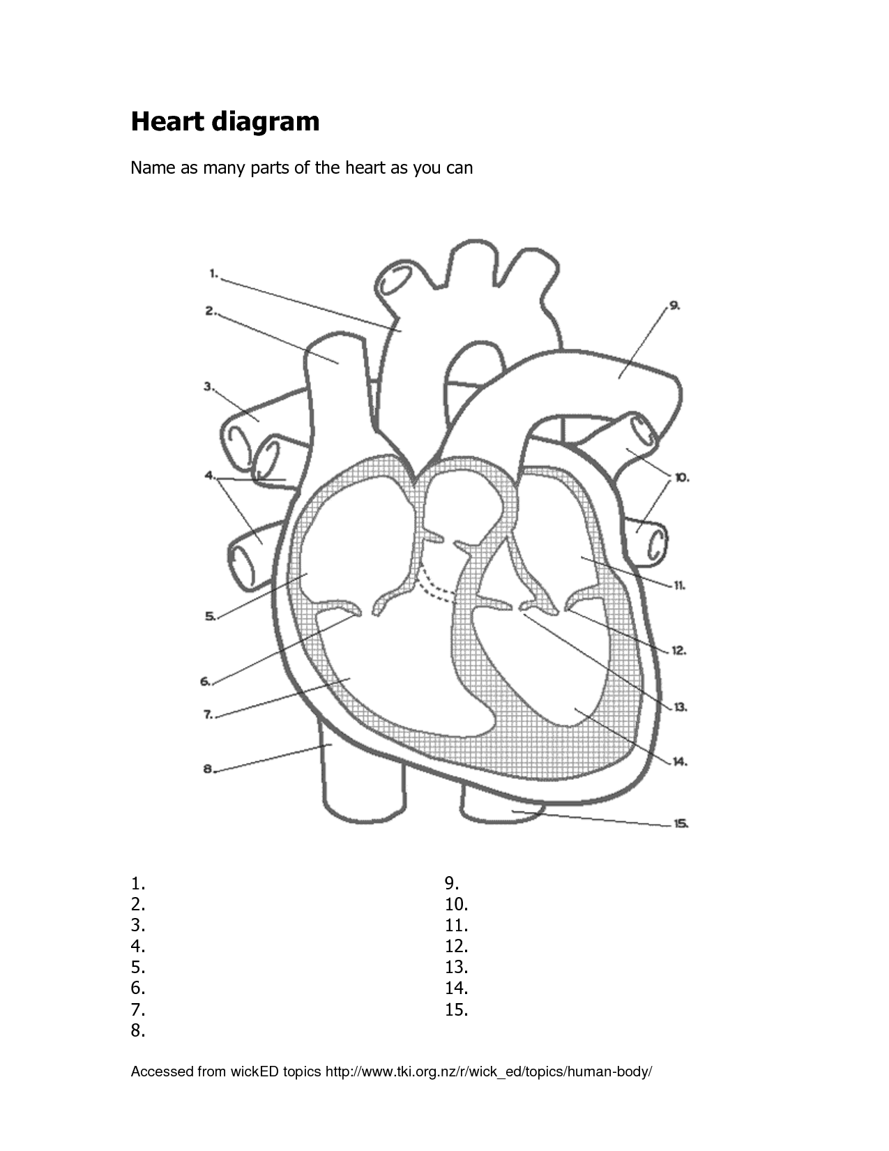 Human Heart Worksheet Blank Sketch Coloring Page