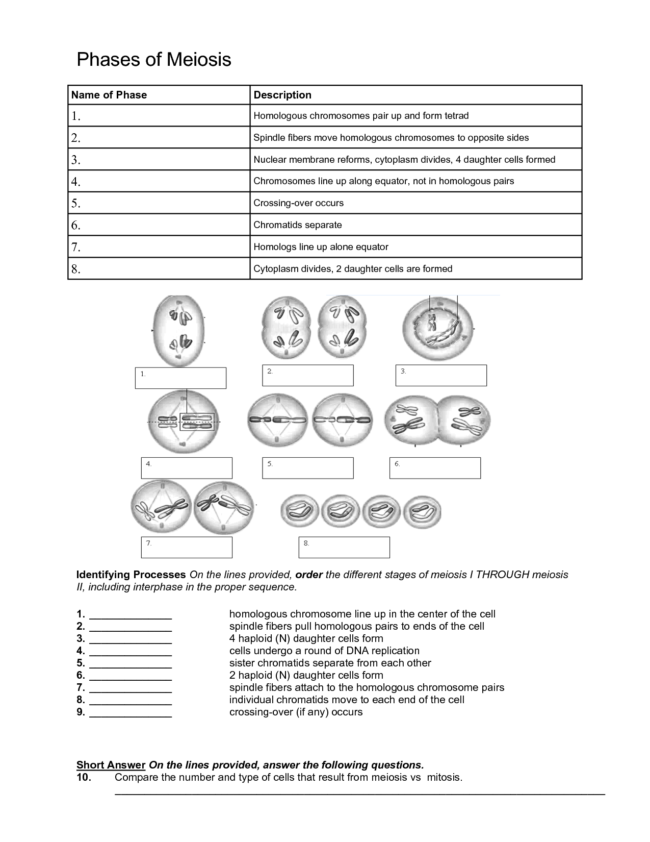 Microscope Biology If Worksheet Answer Key