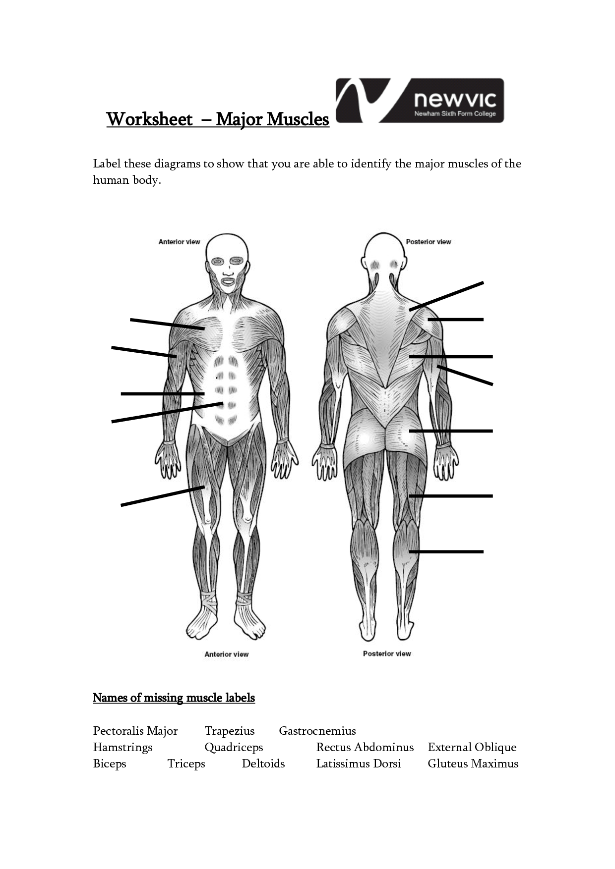 Muscle Anatomy Worksheet