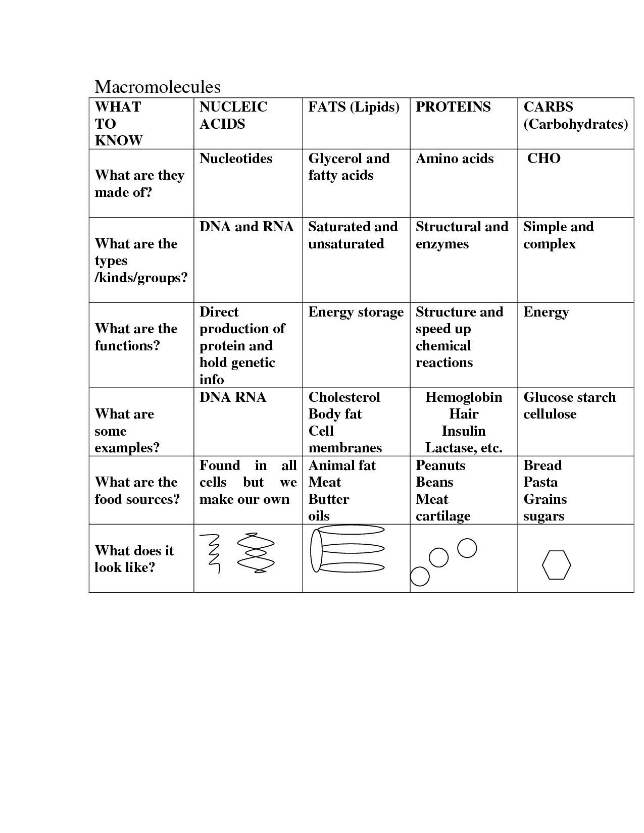 Macromolecules Food Worksheet