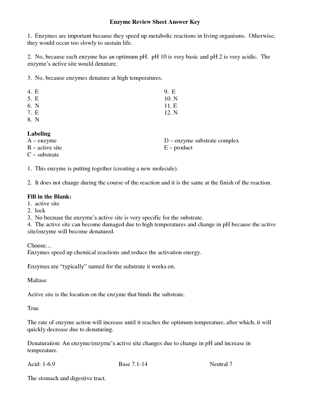 Enzymes Worksheet Answers