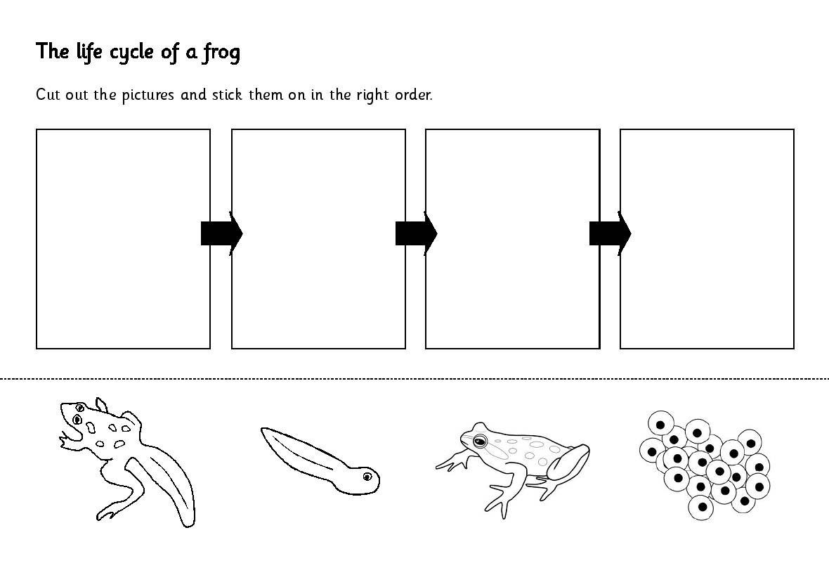 11 Best Images Of Free Worksheets On Life Cycles