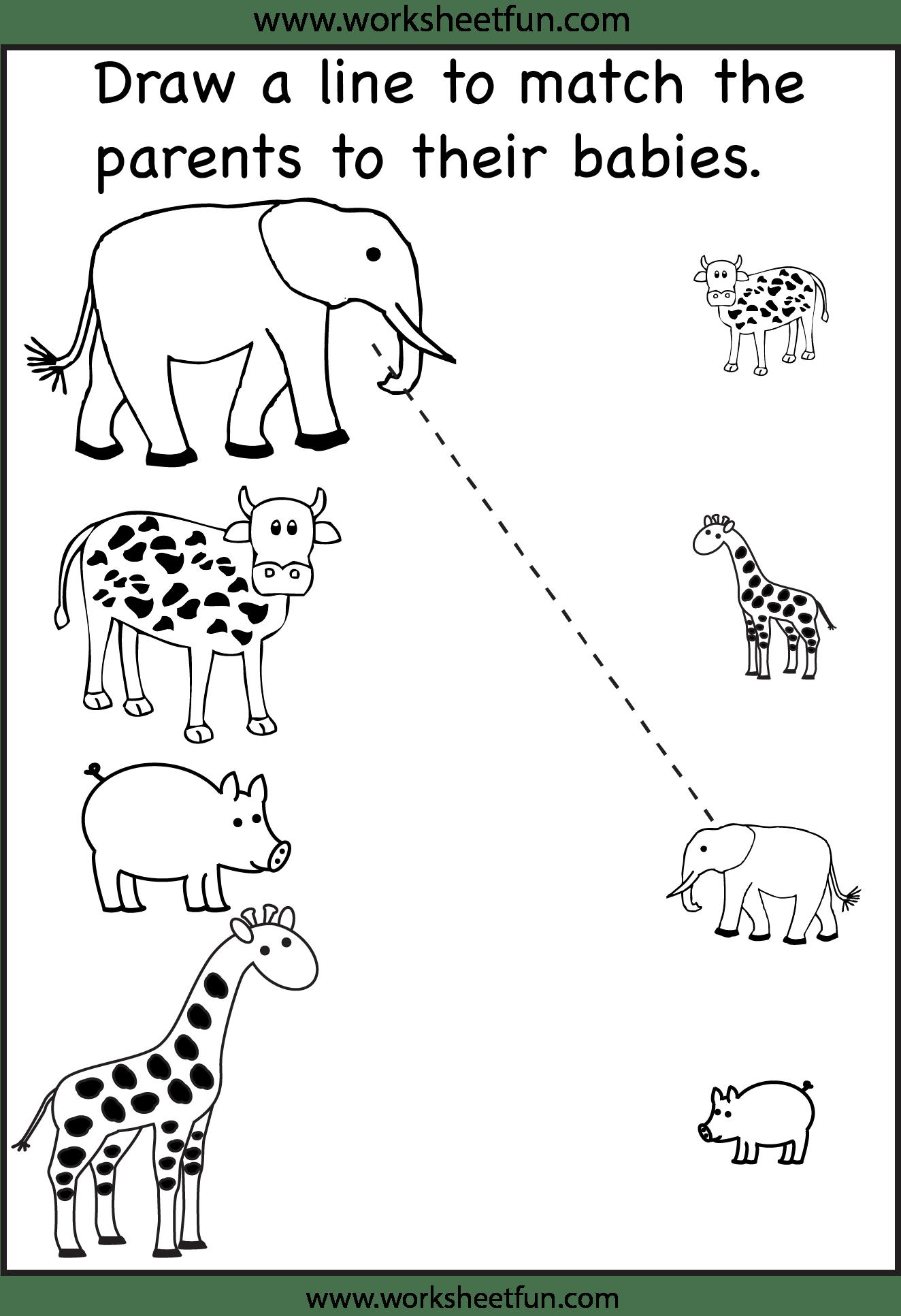 14 Best Images Of Mammal Worksheets For Kindergarten