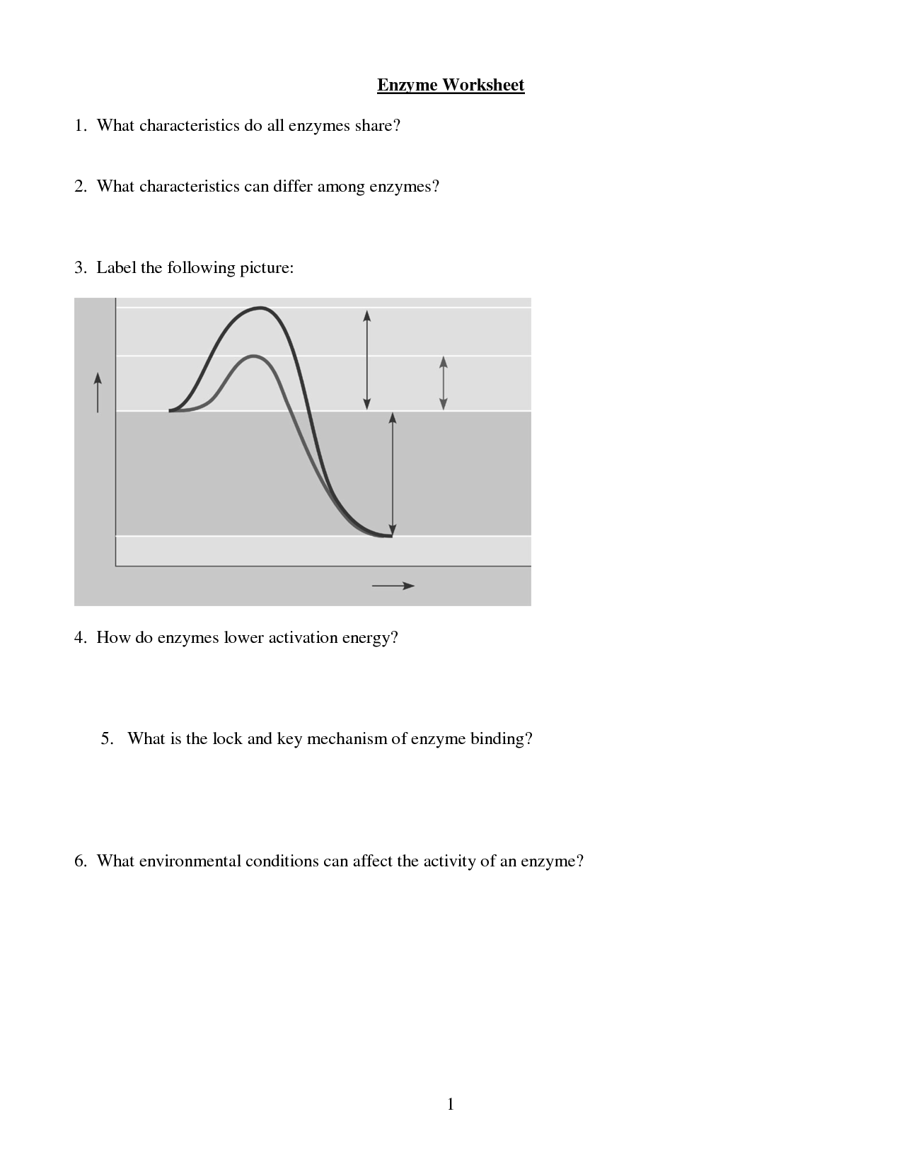 19 Best Images Of Enzyme Reactions Worksheet Answers