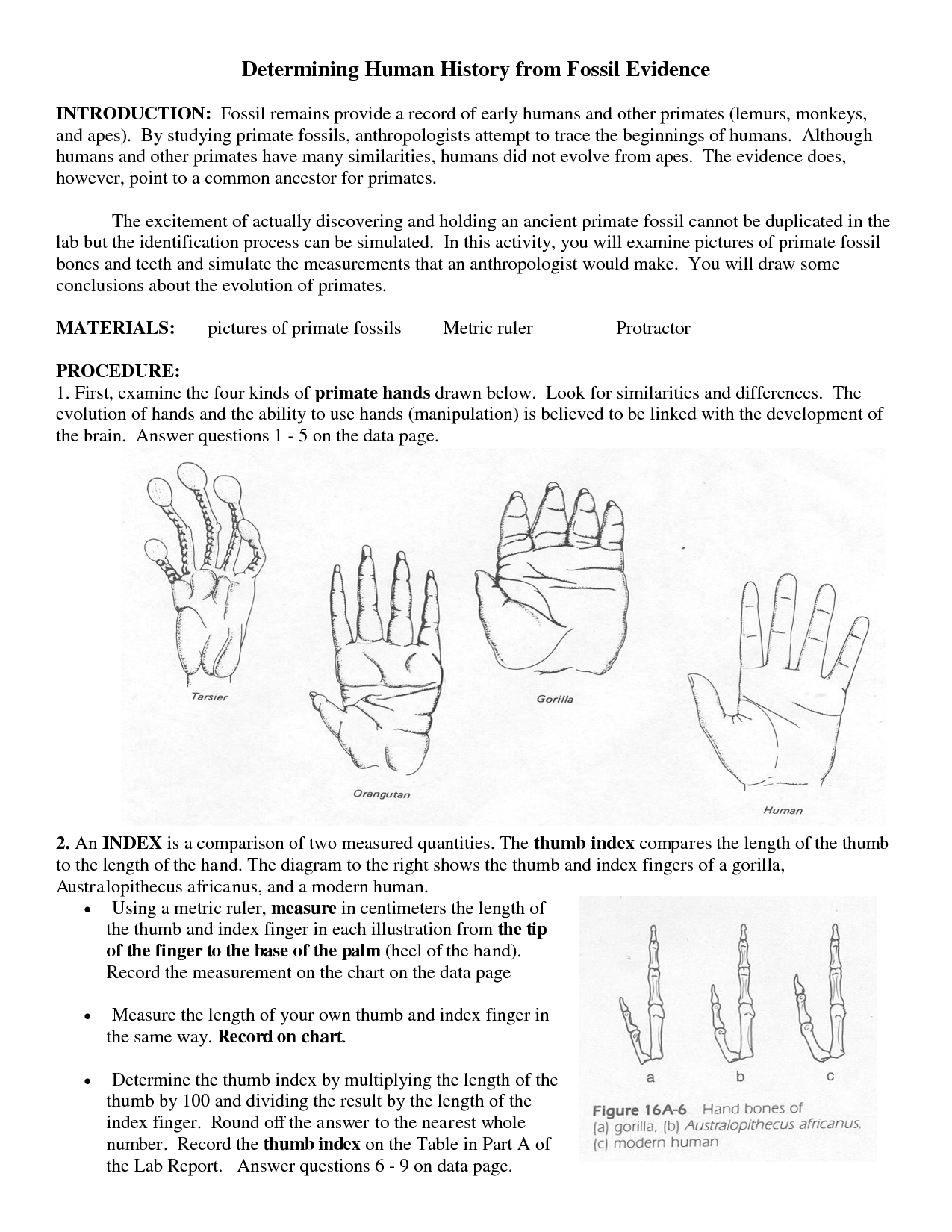 Evidence Of Evolution Worksheet 7 1