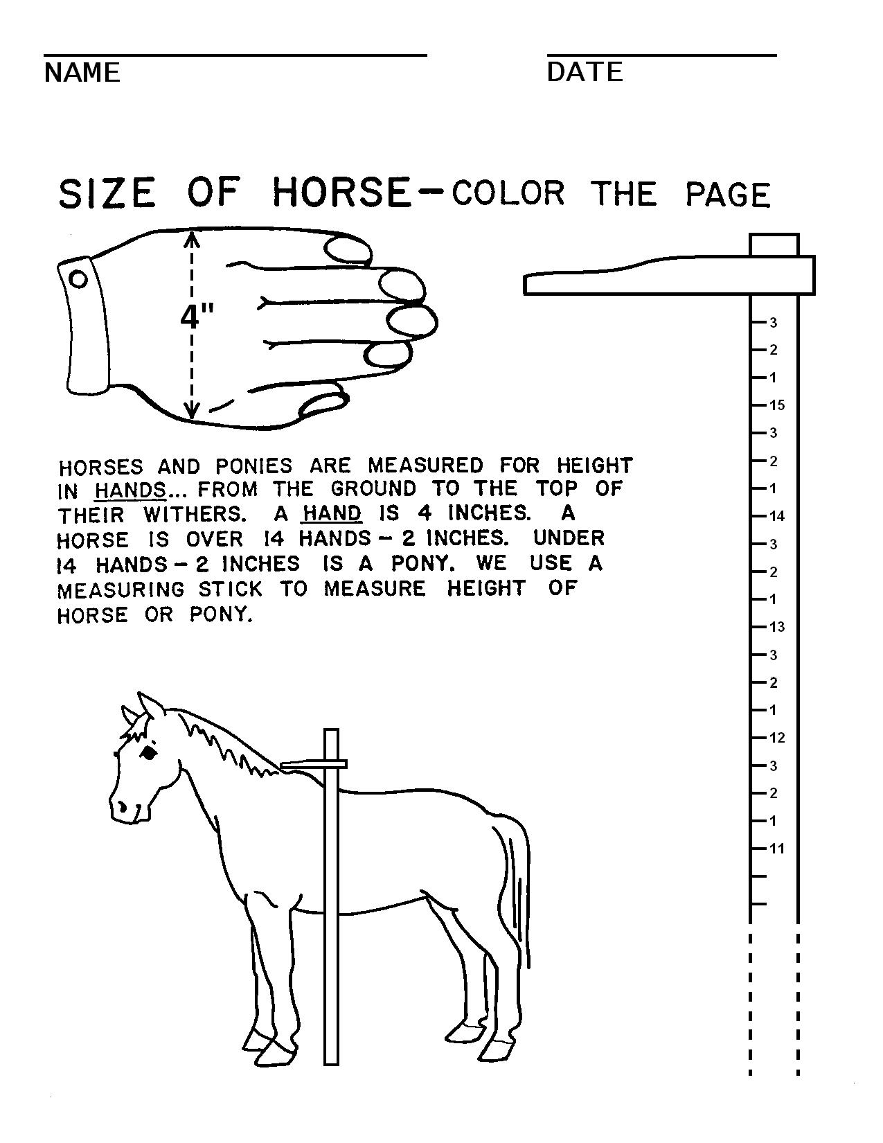 18 Best Images Of Worksheets About Horses