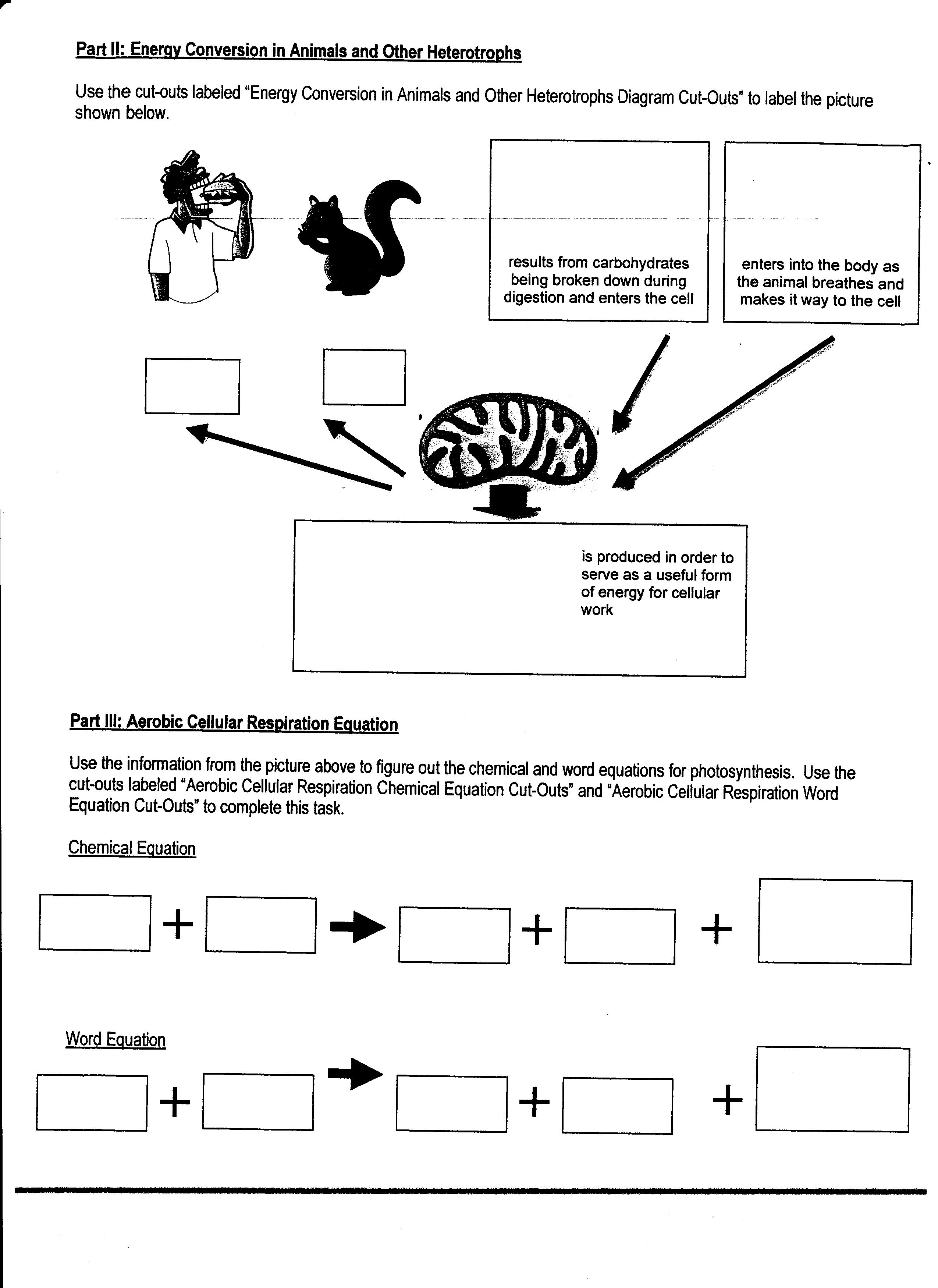 13 Best Images Of Worksheets For Middle School Map
