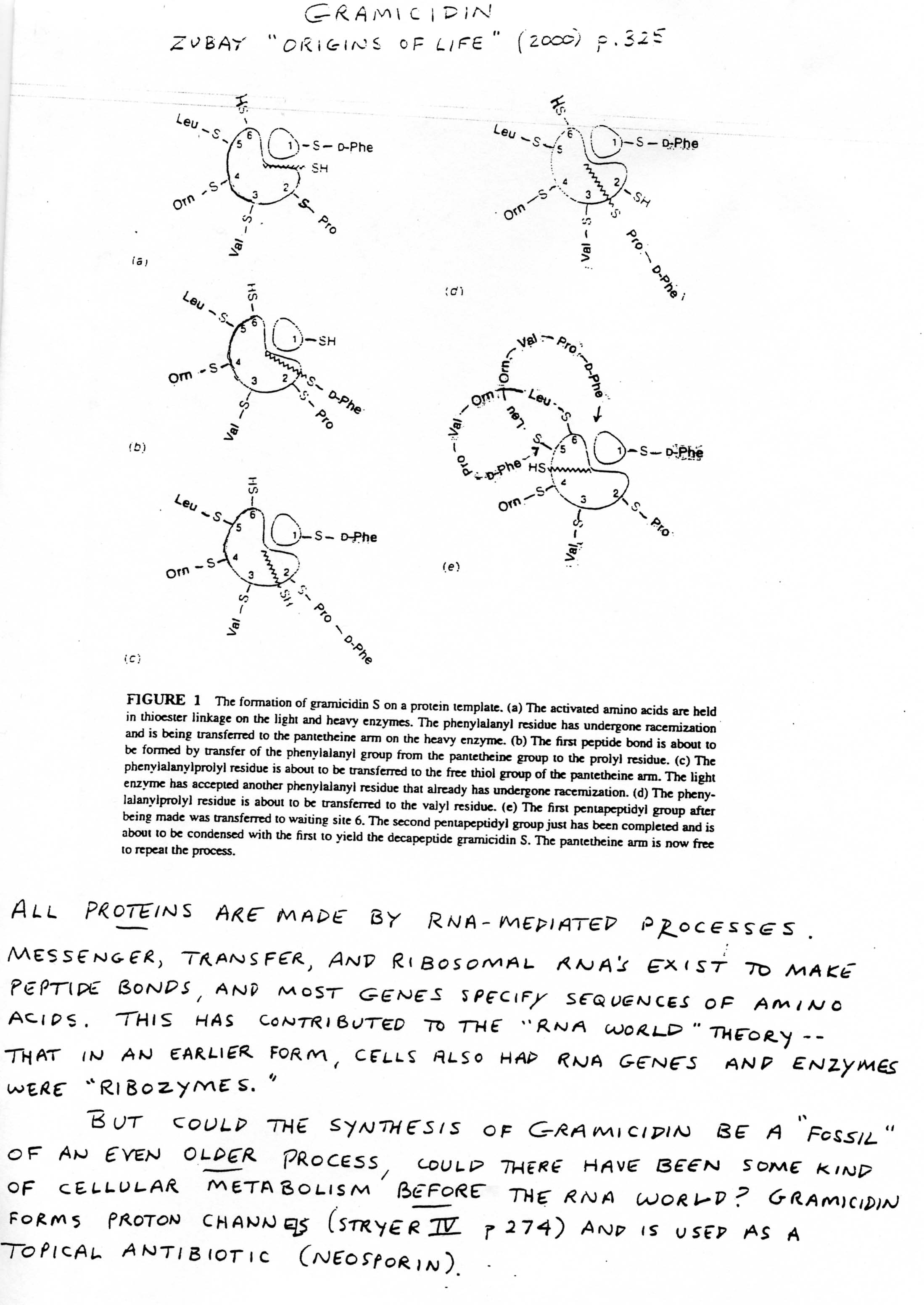 13 Best Images Of Citric Acid Cycle Worksheet