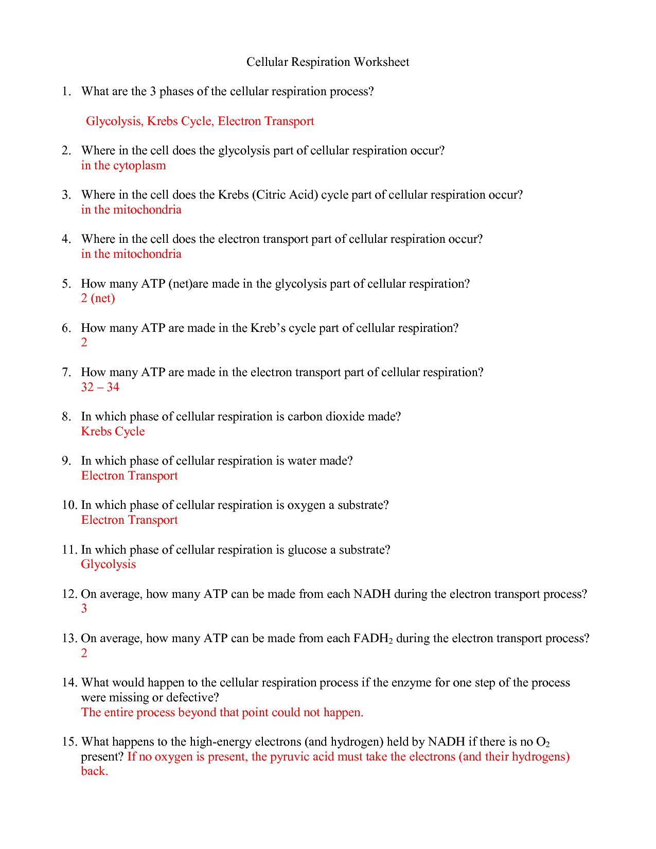 30 Cellular Respiration Worksheet Key
