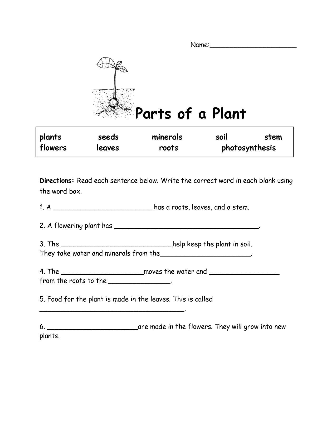 16 Best Images Of Photosynthesis Worksheet Elementary