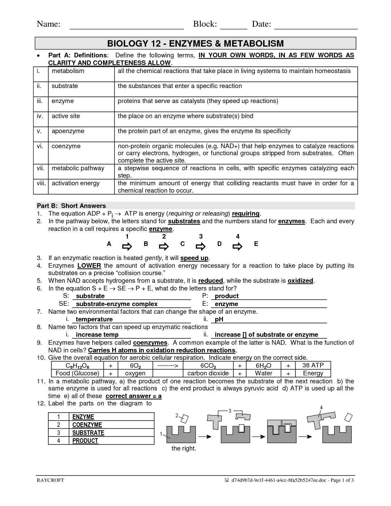 32 Enzyme Reactions Worksheet Answers