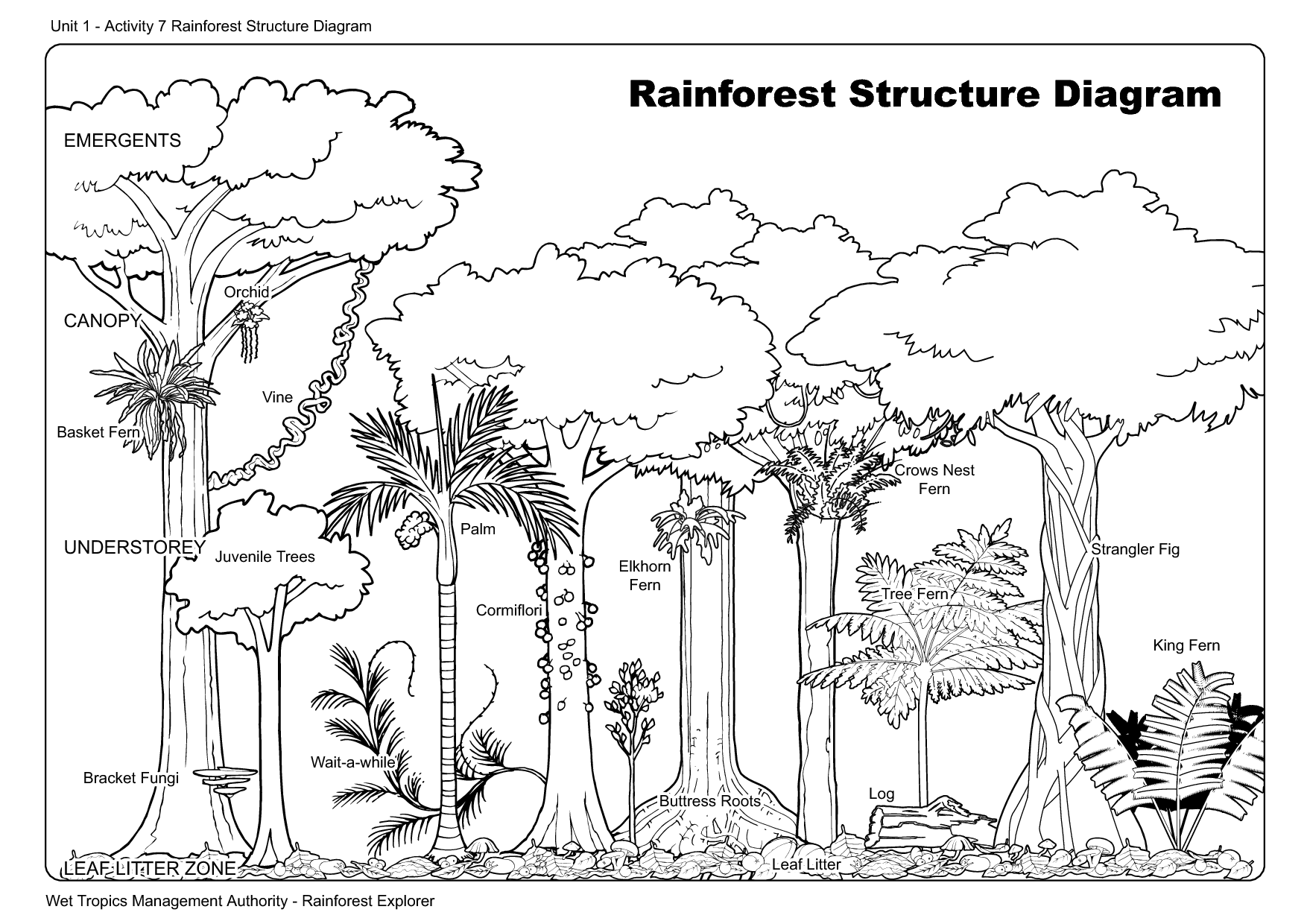 11 Best Images Of Worksheets About Trees