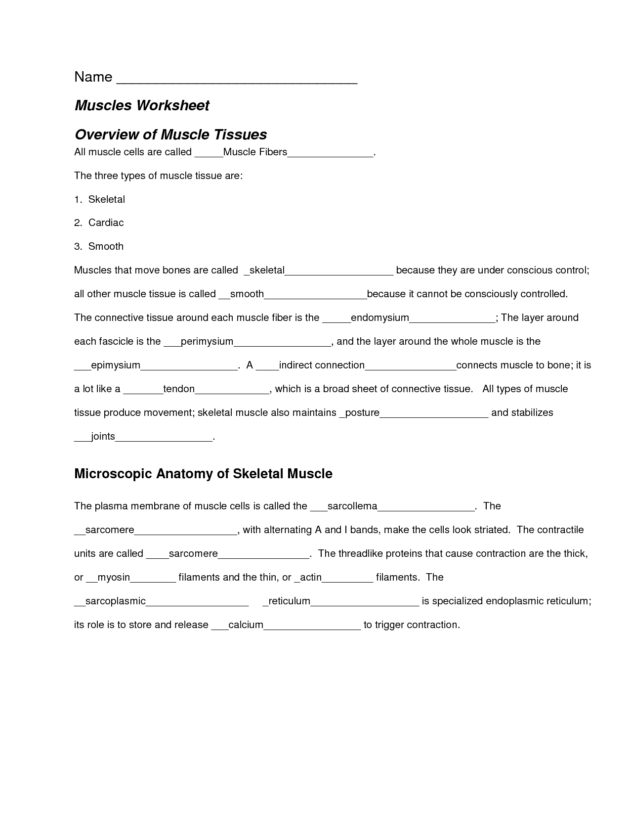 Muscular System Worksheet Human Body