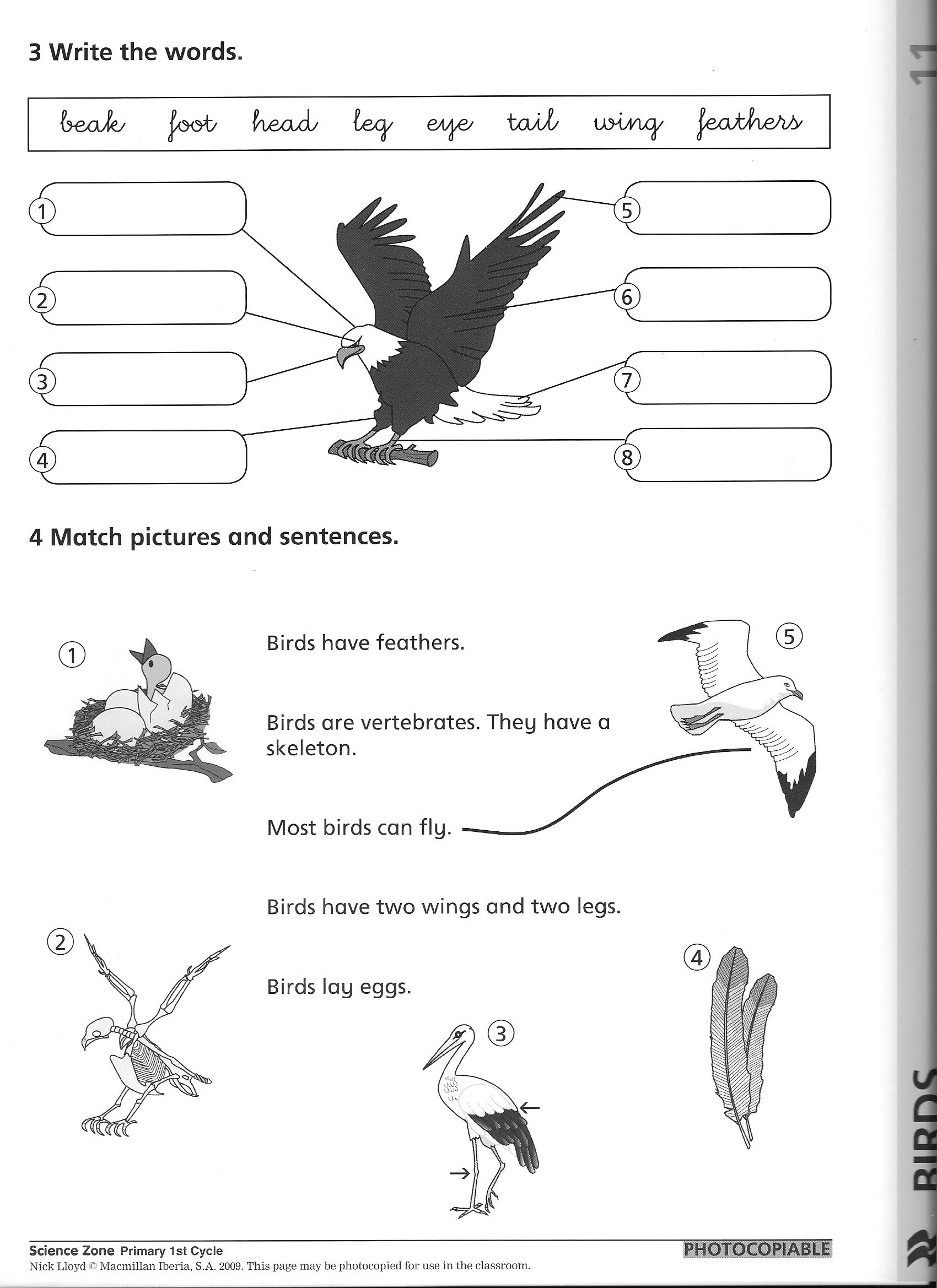 14 Best Images Of Elementary Animal Classification Worksheet