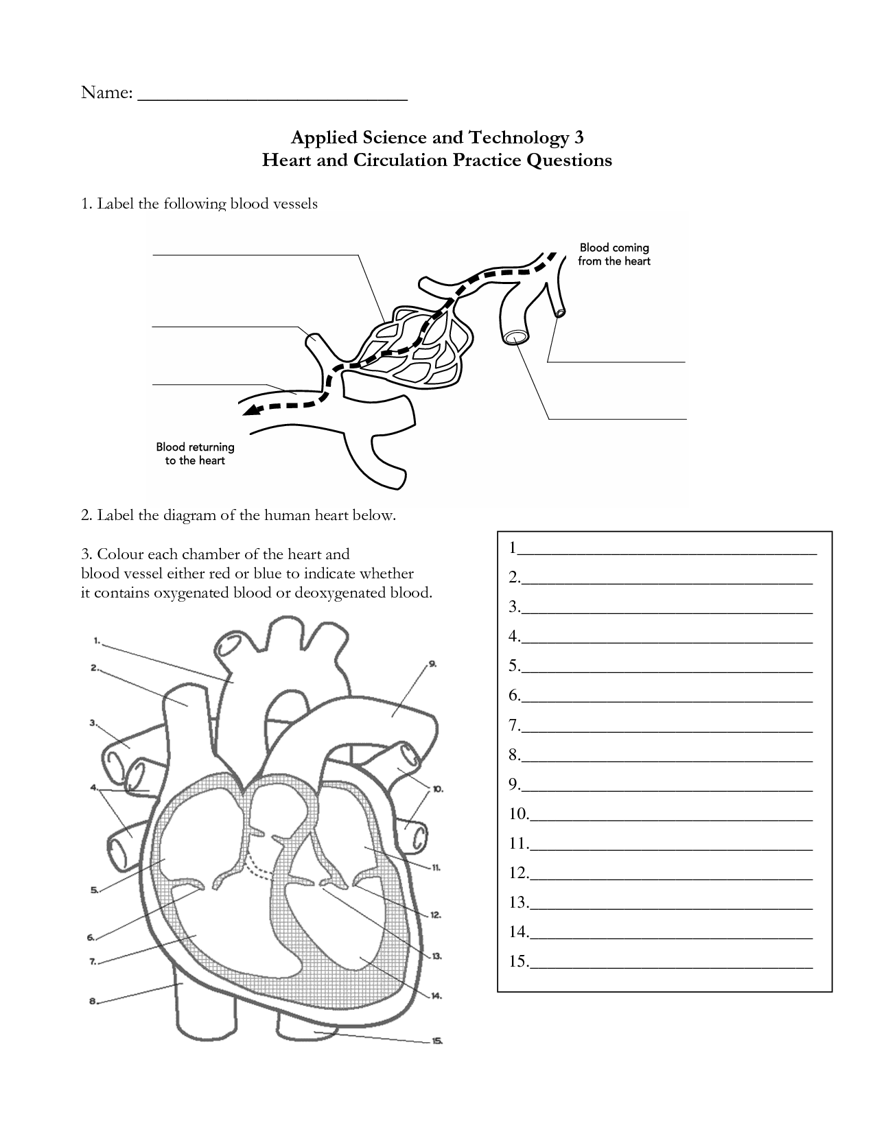 The Human Heart Anatomy And Circulation Worksheet Free