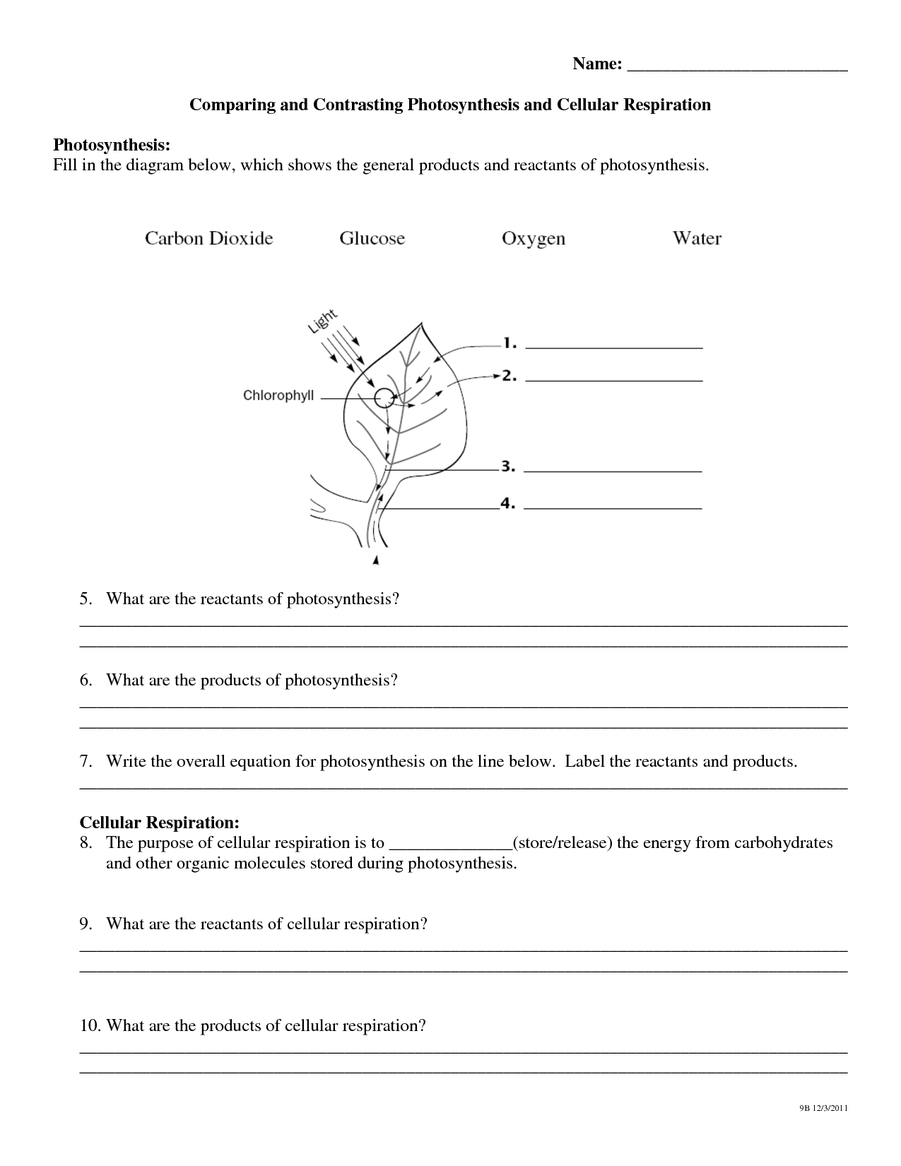 11 Best Images Of Photosynthesis Review Worksheet With Answers