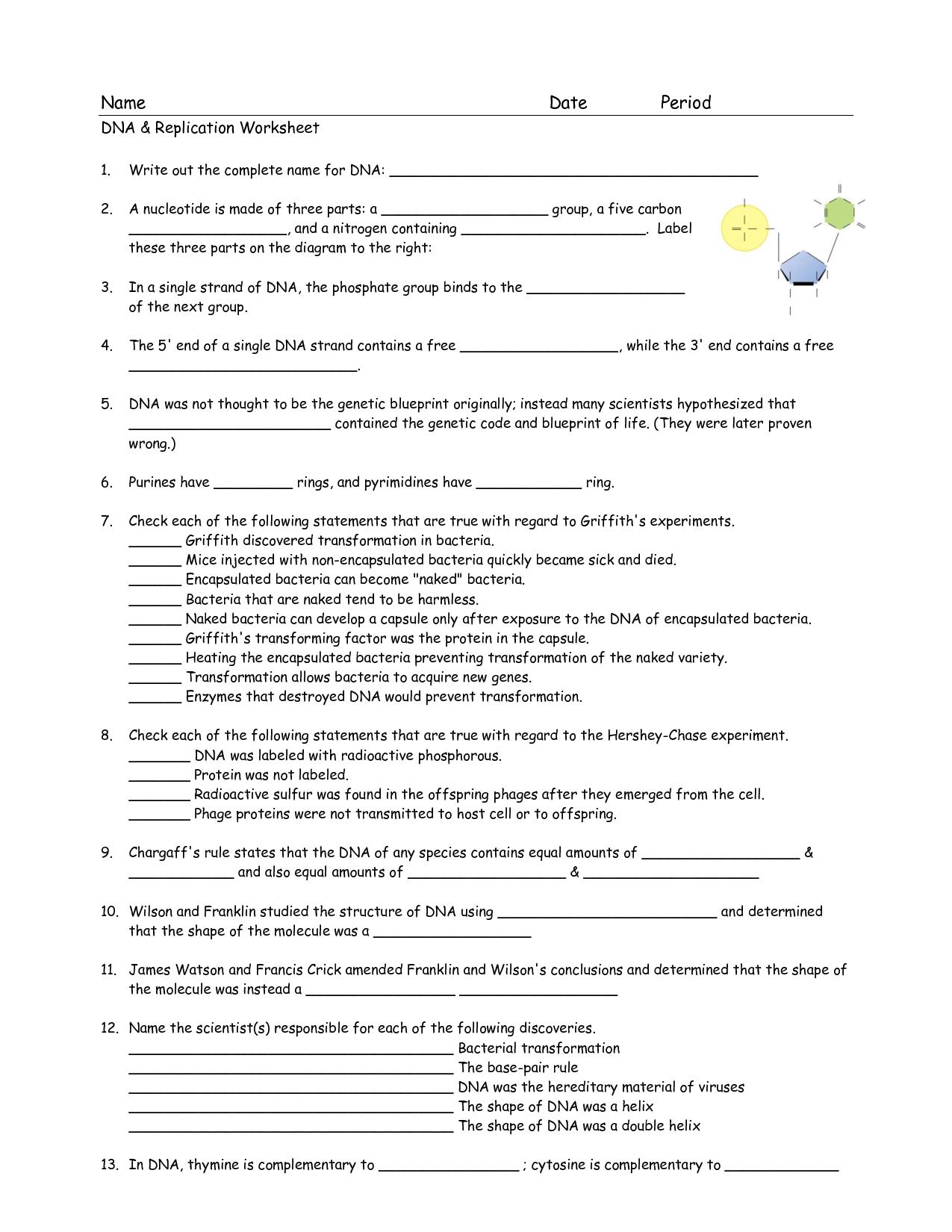 Dna Replication Diagram Worksheet