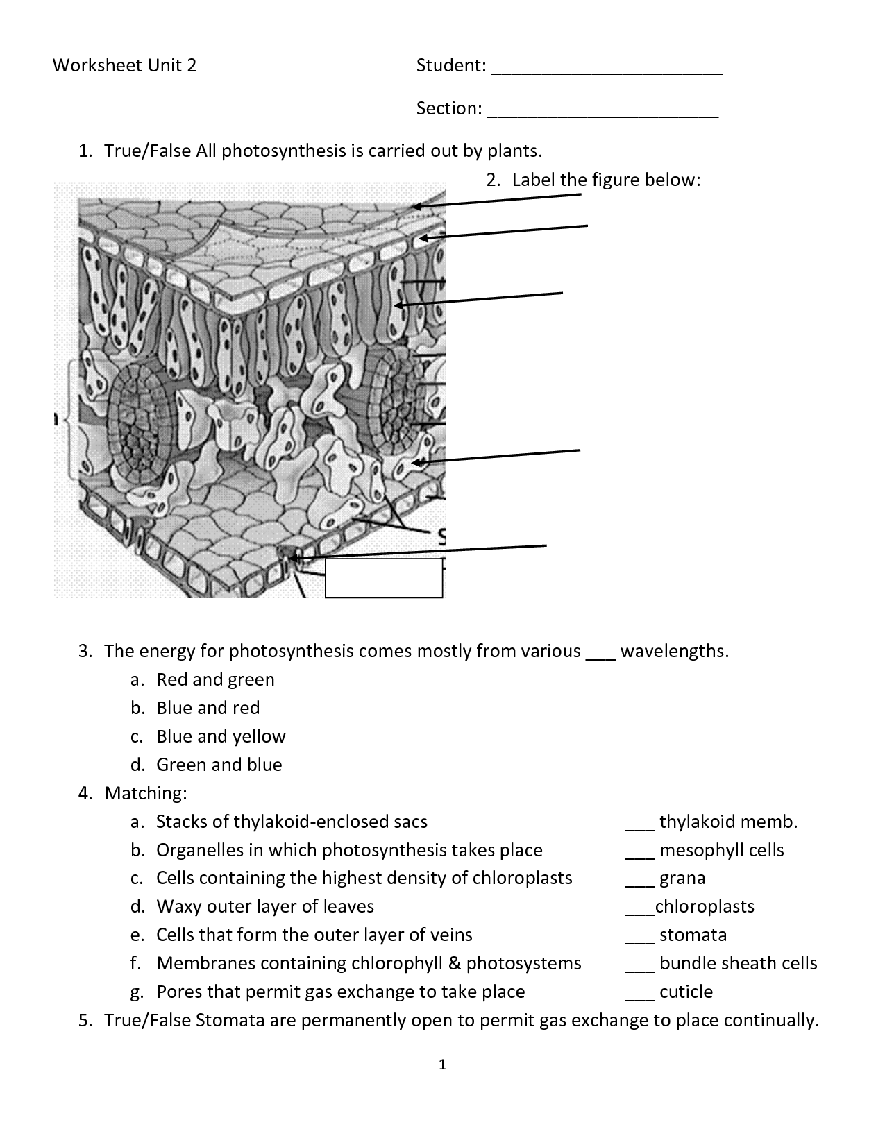 12 Best Images Of Photosynthesis Diagrams Worksheet Answer