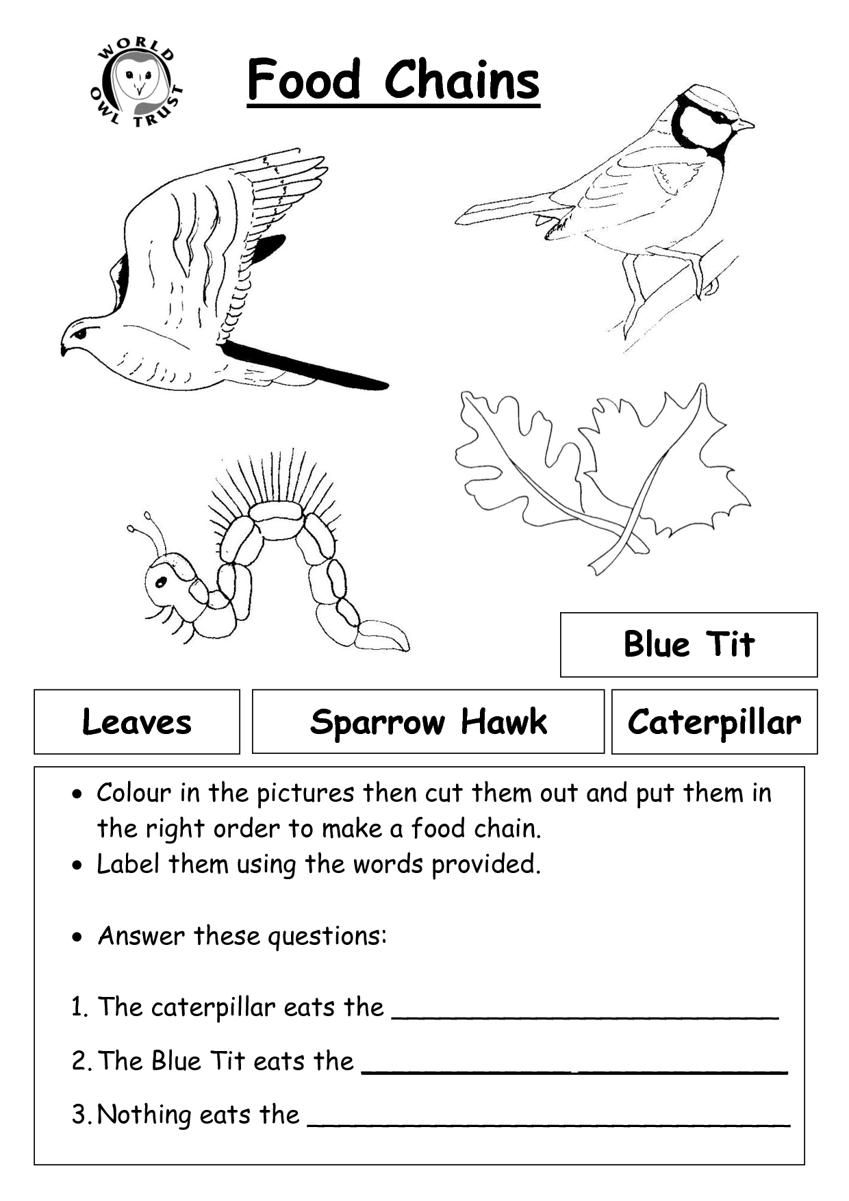 Cut And Paste Food Chain Activities Worksheets
