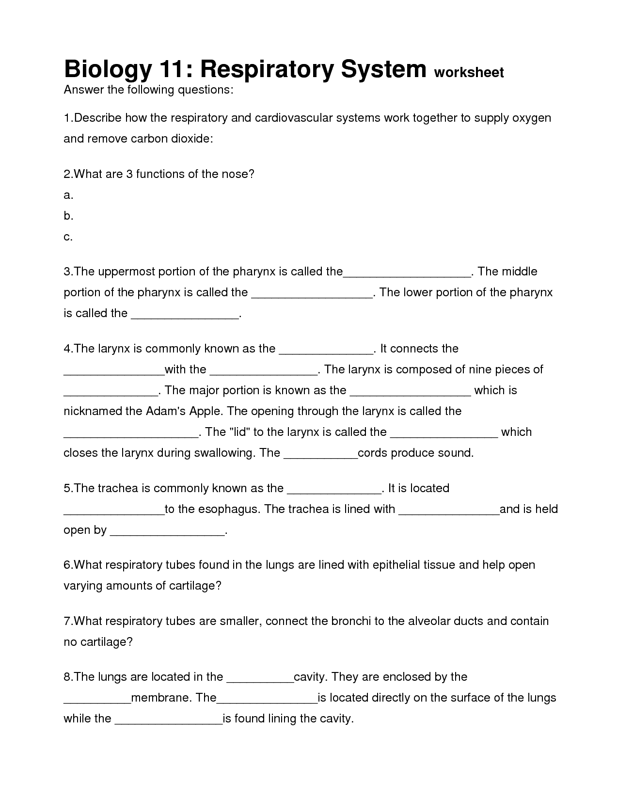 16 Best Images Of The Respiratory System Worksheet Answers