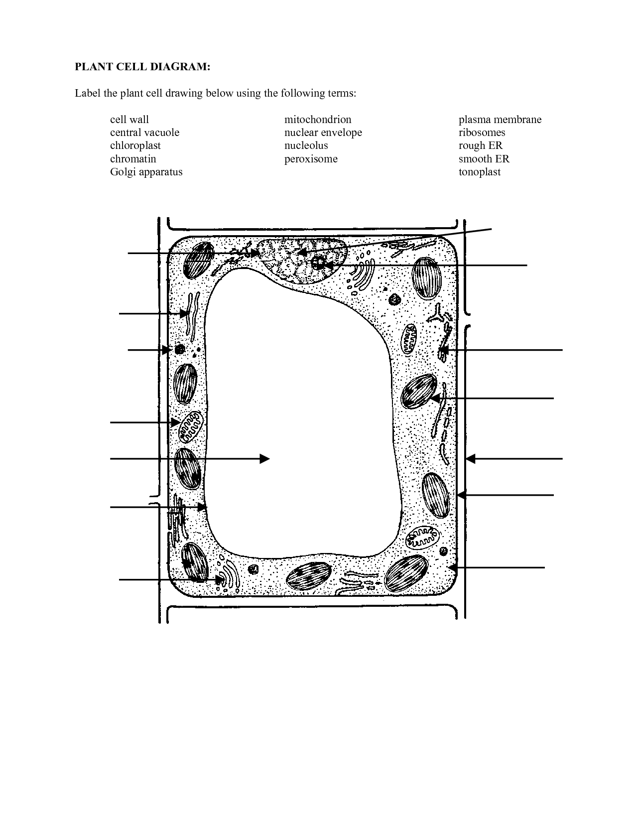 16 Best Images Of Blank Plant Cell Worksheet