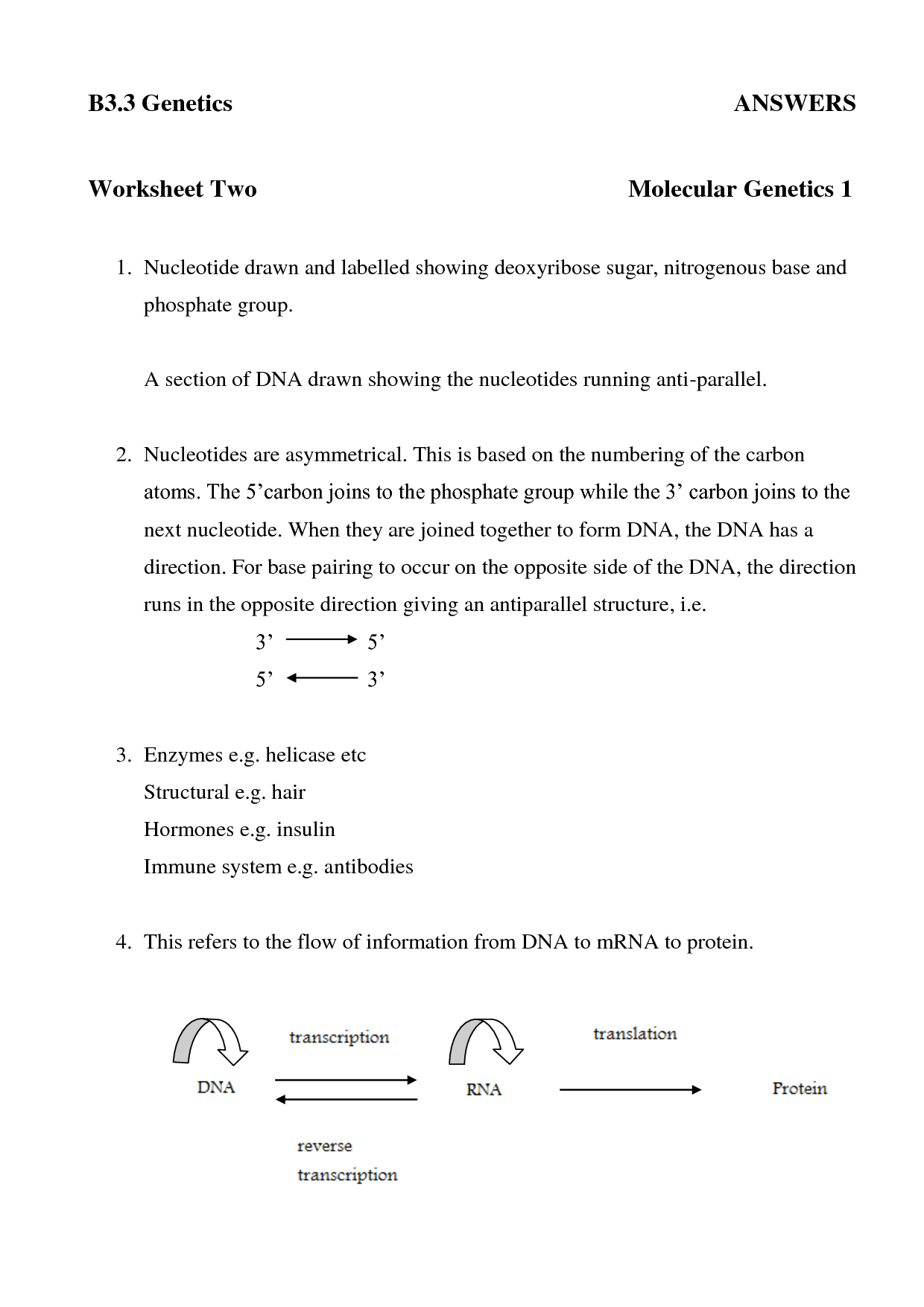 19 Best Images Of Dna Replication Structure Worksheet And Answers