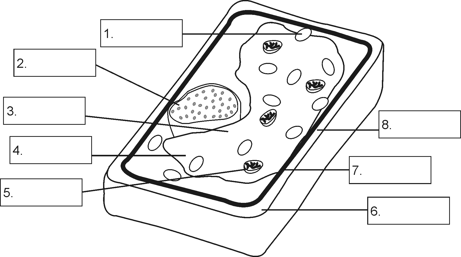 Cell Diagram Labeling