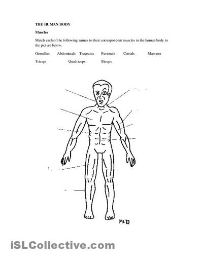 worksheets human body diagram