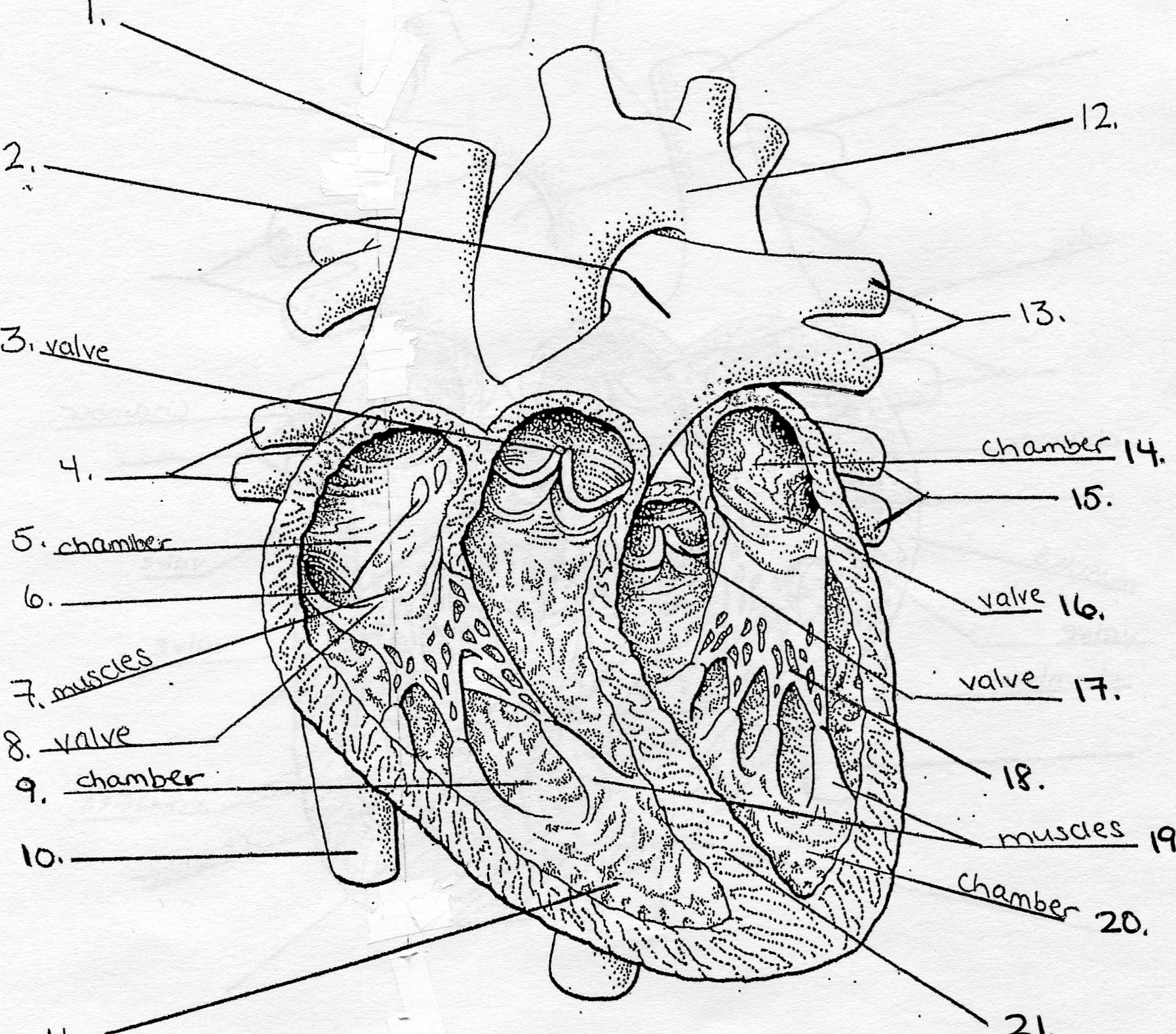 Pig Heart Diagram