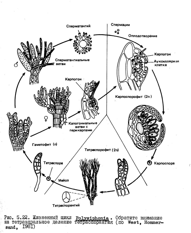 17 Best Images Of Printable Rock Cycle Diagram Worksheet