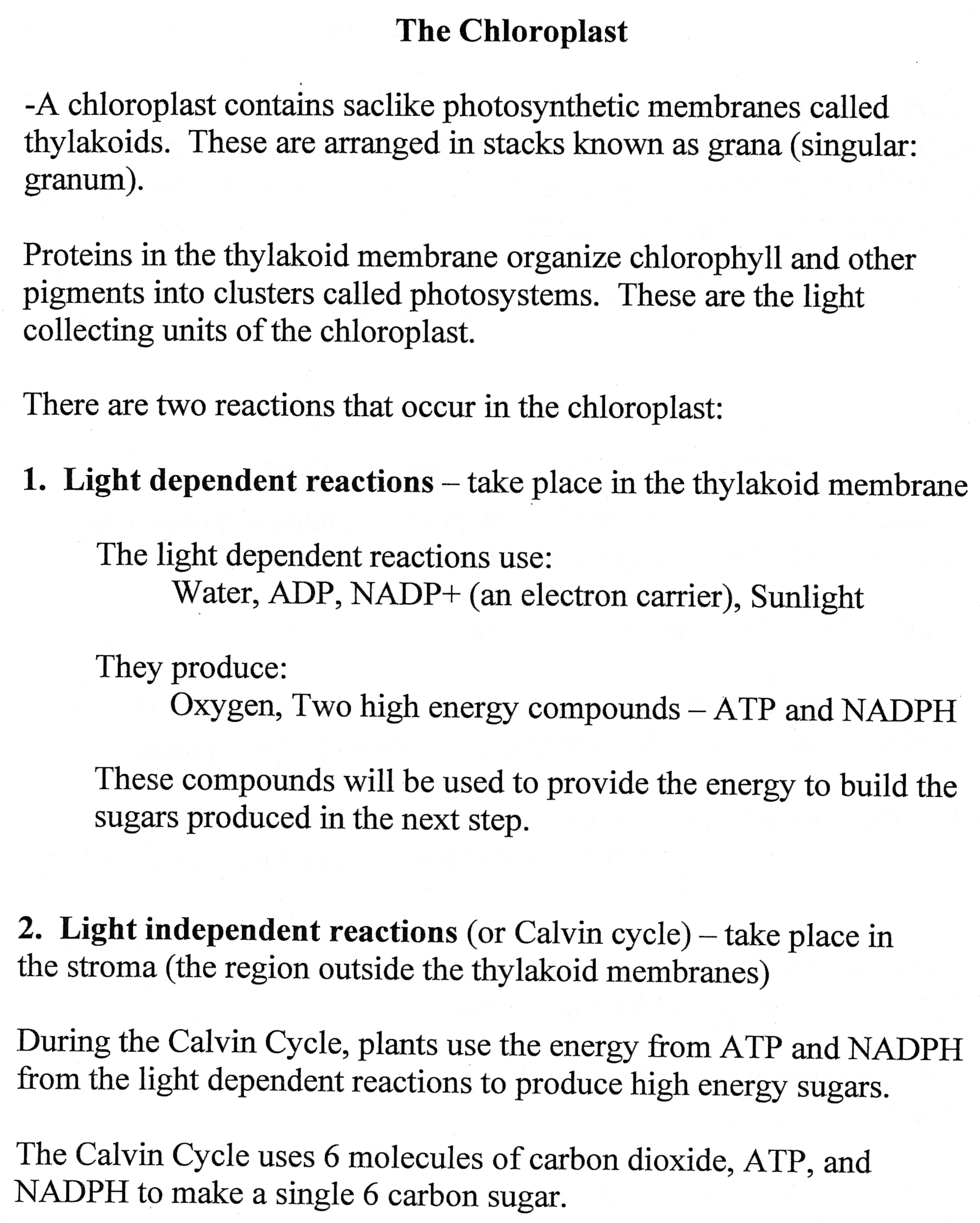 Biology Coursework Photosynthesis