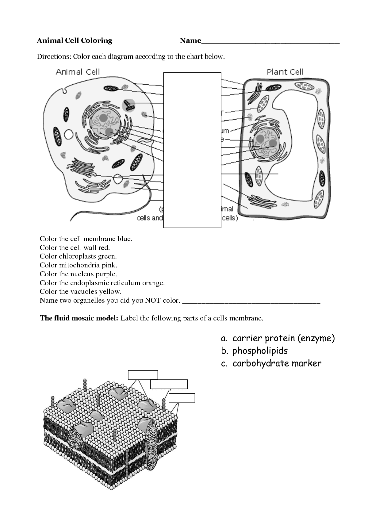 Worksheet On Plant And Animal Cells