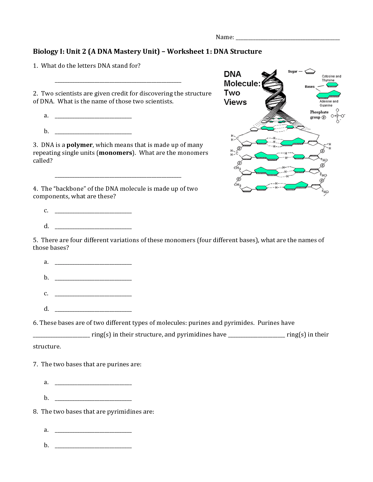 18 Best Images Of High School Dna Structure Worksheet
