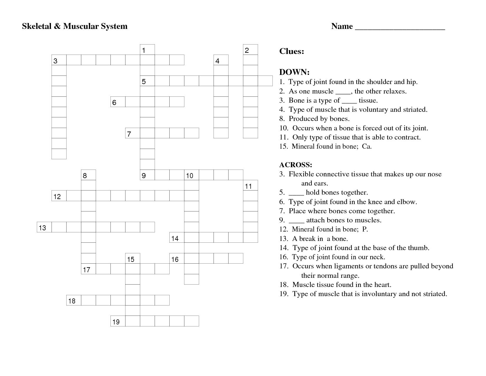 Skeletal System Worksheet High School