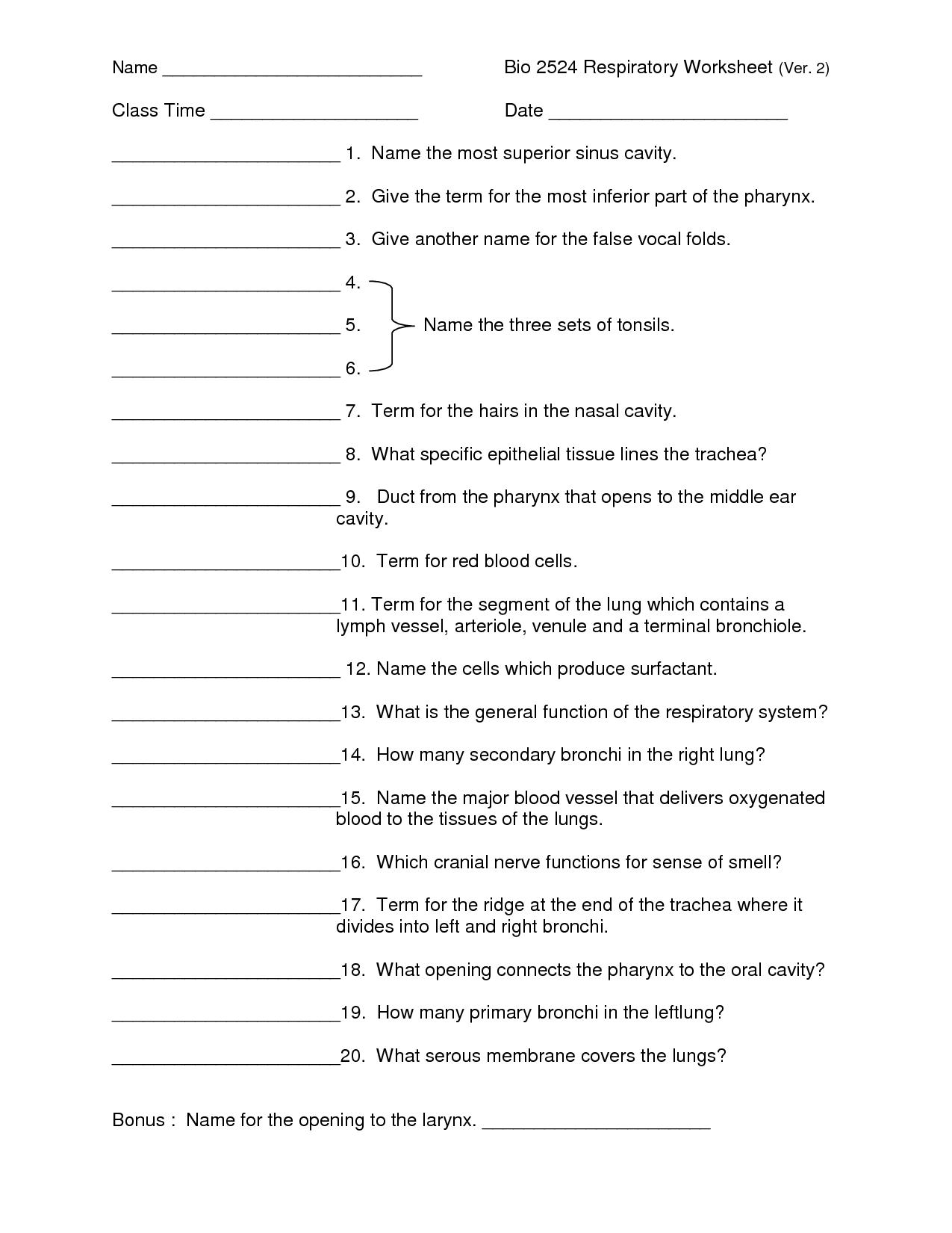 Human Respiratory System Worksheet