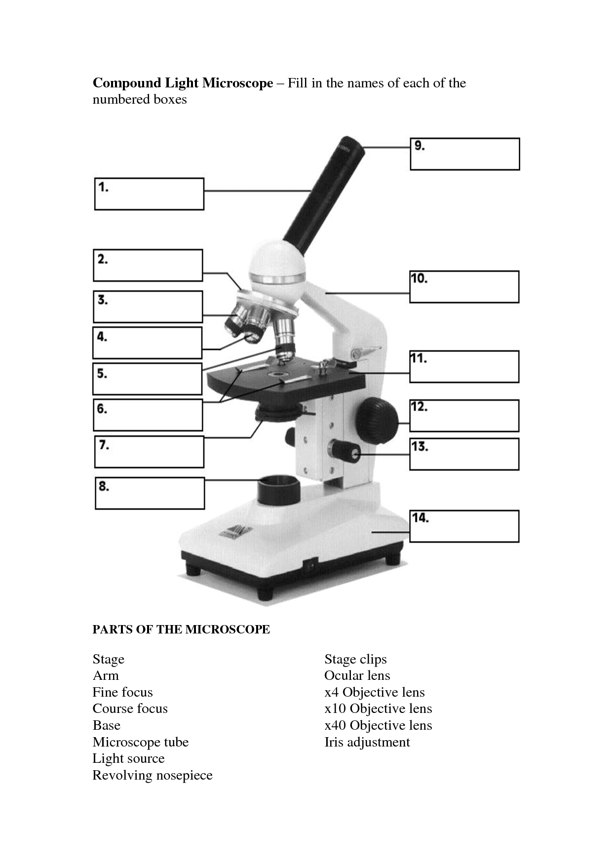 19 Best Images Of Parts Of A Compound Microscope Worksheet