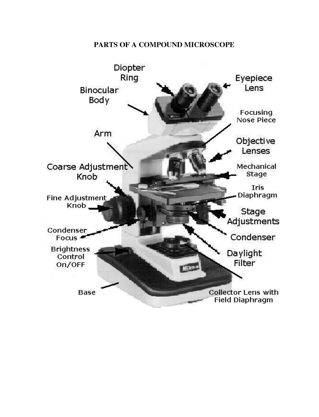 Microscope Lab Worksheet Answers