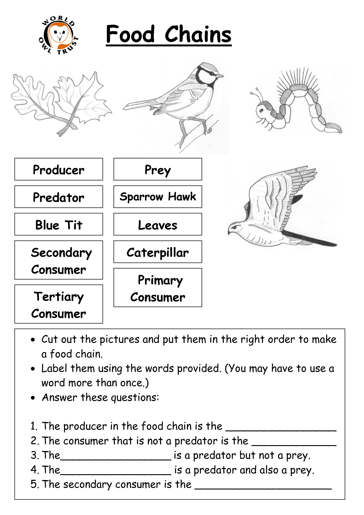 Food Chain Worksheet 3rd Grade