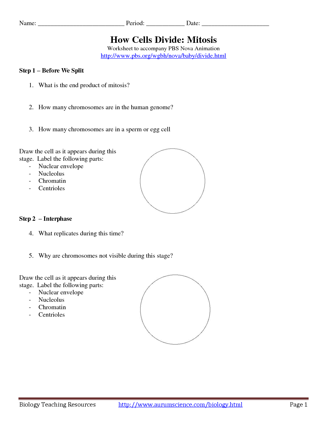 Note Taking Worksheet Cell Process