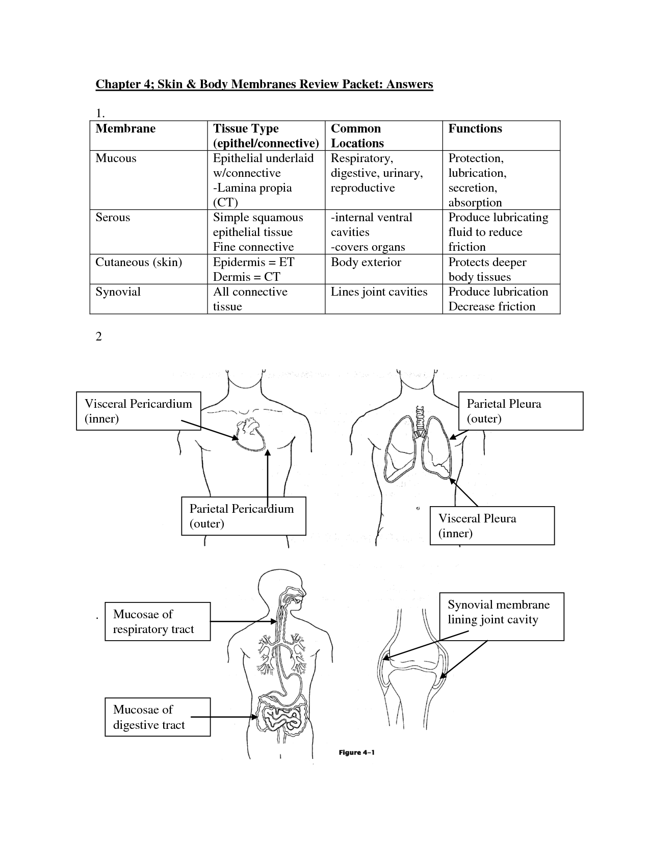 The Human Body An Orientation Worksheet Answers