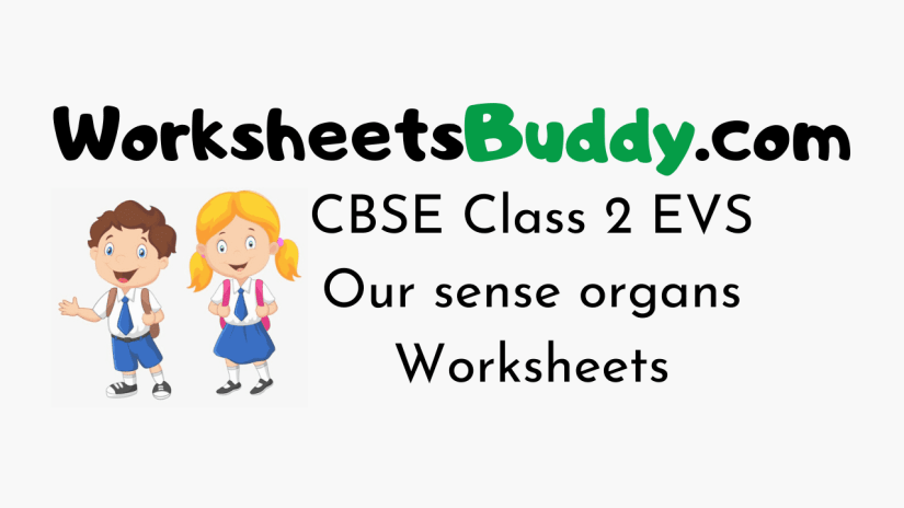CBSE Class 2 EVS Our sense organs Worksheets