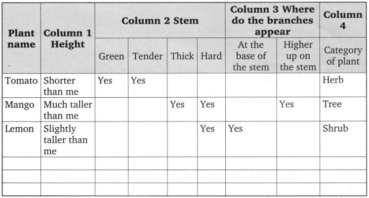 CBSE Class 6 Science Getting to Know Plants Worksheets 1