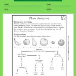 4th Grade Tutoring Worksheets 3
