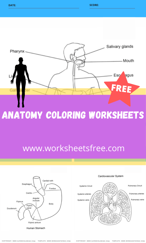 Anatomy Coloring Worksheets