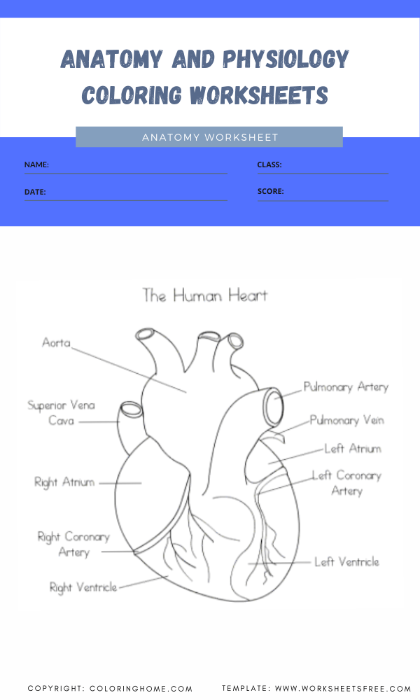 anatomy and physiology coloring worksheets 5